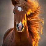 Onurun ve Asaletin Simgesi Atlar