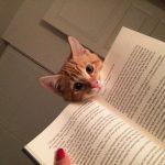 Çok Egoist Bir O Kadar da Sevimli Kediler!