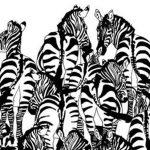 Zebraların arasındaki porsuğu görebiliyor musunuz?