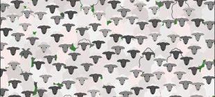 Koyunların İçindeki Keçiyi 10 Saniye İçinde Görebildeyseniz Görsel Zekanızla Gurur Duyabilirsiniz
