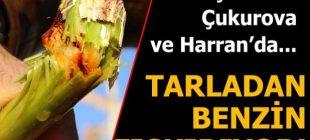 Akaryakıt Ve Yem Sektörü İçin Mucize Bitki Türkiye'ye  Uyum Sağladı Tarladan Benzin Fışkırıyor