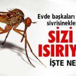 Sivrisinekler Hep Sizi mi Isırıyor İşte Nedeni