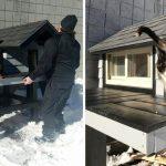 Üşüyüp Karakola Sığınan Kediye Polisler Kıyamadı Ve Bakın Ona Ne Güzel Bir Ev Yaptılar