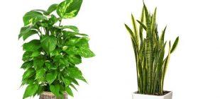 Evinizdeki havayı temizleyen 3 bitkinin hangileri olduğunu öğrenin!