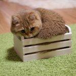 Sosyal Medya'nın En Sevimli, Toparlak ve Yanakları Sıkılası Kedilerinden: Tombul Hosico
