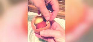 Tavuğun Devasa Boyuttaki Yumurtası ve İçinden Çıkanı Görenler  Çok Şaşırdı