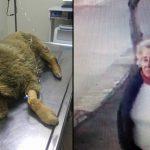 Bir Kadının Gülümseyerek Zehirli Mama Verdiği Bu Sevimli Köpekçik Öldü