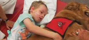 Küçük Çocuk Beyin Travması Geçirdi – Hayatına Giren Köpek Çocuğun Hayatını Böyle Değiştirdi