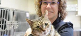 Amerika'da kaybolup 4 yıl sonra Kanada'da ortaya çıkan gizemli kedi BooBoo