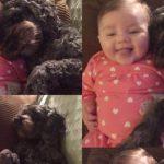 Cesur Köpek Yangının Ortasında Kalan Bebeği Kurtarmak İçin Canını Feda Etti