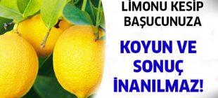 Yatmadan önce yatağınızın yanına kesilmiş bir limon koyduğunuzda