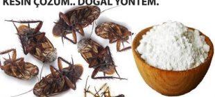Hamam Böceklerinden Tümden Kurtulmak İçin Doğal Böcek İlacı