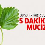 Çilek yaprağındaki mucize, bu faydasını hiç duymadınız…