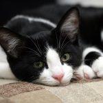 Sahibini Başka Bir Kadına Giderek Aldatan Kedinin Velayet Davasına Uzanan Hikayesi