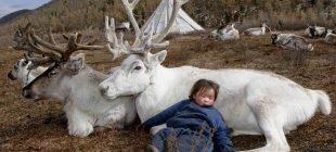 Fotoğrafçı Moğolistanlı Kabilenin Hayatına Işık Tuttu – İşte Duhaların İnanılmaz Kültürü Ve Gelenekleri