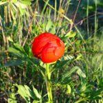 Bu çiçeği koparmanın cezası 42 bin lira