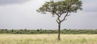 Fotoğraftaki leoparı görebildiniz mi?