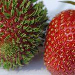 Dolapta Unutulup Tanınamaz Hale Gelen 11 Meyve Ve Sebze