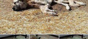 Köpek, açlıktan ölmek üzereyken bulundu