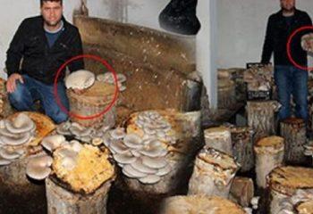 Kavak kütükleri ekmek teknesi oldu