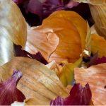 Soğan Kabuklarını Çöpe Atmamanız İçin 6 İkna Edici Neden