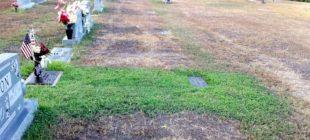 Oğlunun Mezarının Üstü Yemyeşildi – Nedenini Anlayınca Gözyaşların Boğuldu