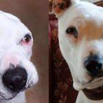Yıllarca İşkence Gören Köpek 12 Yaşındaki Çocuğun Üstüne Gidip Bakın Ne Yaptı