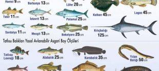 Bakanlık Tüm Vatandaşları Uyardı Bu Boyuttaki Balıkları Sakın Satın Almayın