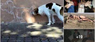 Yalnız Olmanın Zorluklarını Anlatan Komik Fotoğraflar