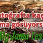 Görsel Algı Testi: Bu fotoğrafta kaç tane puma görüyorsun?