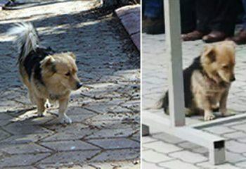 Sahibi Ölünce Evden Kaçmaya Başladı – Oğlu Köpeği Takip Edince Gerçeği Öğrendi