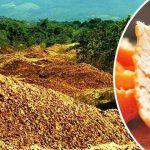 Tahrip Edilen Araziye Tonlarca Portakal Kabuğu Bıraktılar – Yıllar Sonra Burası Bakın Nasıl Değişti