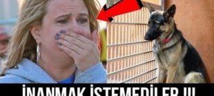 Sahipleri Uyurken Köpeğin Her Gece Yaptığını Görenler Gözyaşlarını Tutamadılar !!