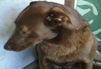 2 Yıldır Barınakta Yaşayan Köpek Tanıdık Bir Yüz Görünce Bakın Nasıl Heyecanlandı