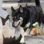 12 yıl sahibinin mezarı başında yaşayan köpek öldü