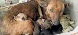 Sokak Köpeğinin Yanında Bir El Gördü – Köpeği Kaldırınca Gözlerine İnanamadı
