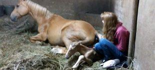 Doğumdan Sonra Atları Tuhaf Sesler Çıkarmaya Başladı – Gerçeği Öğrenince Şok Oldular