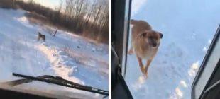 Otobüs Şoförü Her Gün Aynı Yerde Durup Bakın Ne Yapıyor