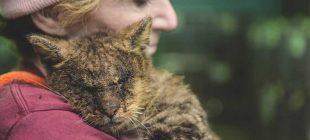 'İğrenç' Görünüyor Diye Kimse Kediye Dokunmuyordu – Bir Kadın Kediyi Böyle Değiştirdi
