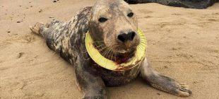 Son anda ölümden döndürülen hayvanlar