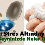 Stres Altındayken Beyninizde Neler Olduğunu Görmek İster misiniz?