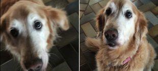 Sahibi Tümörünün Kaybolduğunu Söyledi – Köpeğin Verdiği Tepki İzleyenleri Şaşırttı