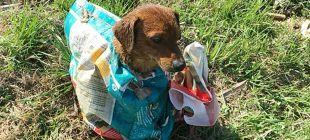 Yolun Kenarında Çantanın İçinden Kafasını Çıkarmış Olan Köpeği Gördüler – Çantayı Açınca Şok Oldular