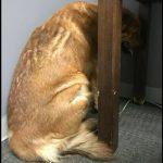 Sahibi Ölen Köpek Günlerce Arkasını Dönüp Duvarı İzledi – Ona Uzanan Bir El Hayatını Böyle Değiştirdi