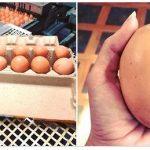 Normal Yumurtaların Üç Katı Büyüklüğündeki Dev Yumurtanın İçinden Bakın Ne Çıktı