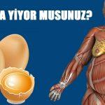 Doktor Günde İki Yumurta Yemesini Söyledi – Vücudundaki Değişikliklere O Bile İnanamadı