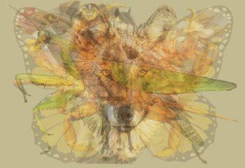 Resimde ilk gördüğünüz hayvan baskın karakterinizi ortaya çıkarıyor Pekii siz ilk önce hangisini gördünüz?