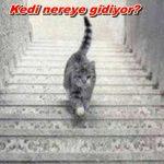 Görsel zeka testi: Kedi Aşağı mı İniyor? Yukarı mı Çıkıyor? Cevabı için TIKLAYIN