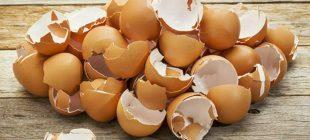Arkadaşı Yumurta Kabuklarını Çöpe Atmamasını Söyledi – Tavsiyesinden Sonra Bahçesi Coştu Hepsi yumurta kabuğu sayesinde.