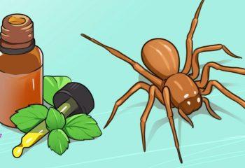 Bu Basit Doğal Karışımla Örümcekler Evinizin Yakınından Dahi Geçemeyecek